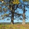 Dlouhá - pomník obětem 1. světové války | boční strana znovuvztyčeného pomníku padlým na návrší Heinberg nad zaniklou vsí Dlouhá - říjen 2018