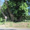 Děpoltovice - kaple sv. Jana Nepomuckého | pozůstatky kaple sv. Jana Nepomuckého leží pod skupinou stromů na křižovatce cest u Děpoltovic - květen 2011