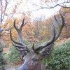 Karlovy Vary - plastika jelena | detail litinové plastiky jelena - říjen 2009