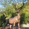 Karlovy Vary - plastika jelena | litinová plastika jelena - říjen 2011