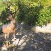 Karlovy Vary - plastika jelena | plastika jelena v zahradě sanatoria Richmond - říjen 2011