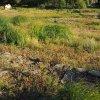 Mlyňany (Lindles) | kamenné základy patřící nejspíše stržené usedlosti č. p. 21 Franze Reicha zvané